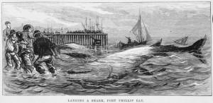 Landing a shark, Port Phillip Bay: The Australasian Sketcher, 1876