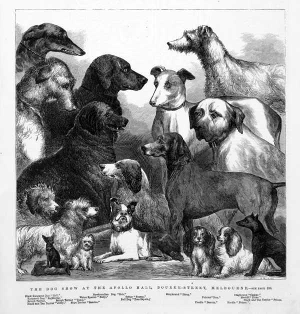 Dog Show in the Apollo Hall, Bourke Street, Melbourne, 1871