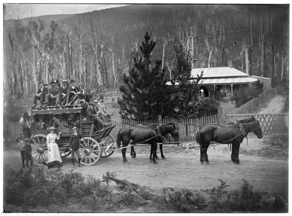 Cobb & Co. coach and horses outside Harcourt, Warburton, Victoria]