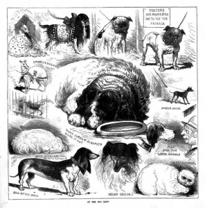 Drawing of Melbourne dogs from the Australasian Sketcher, 1885