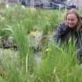 Linda Tegg's Grasslands opens
