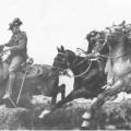 The Waler; a war horse