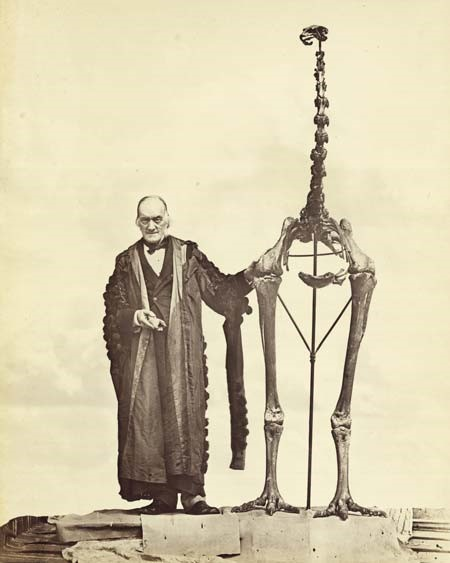 Richard Owen with a moa skeleton, from Memoirs on the extinct wingless birds of New Zealand: with an appendix on those of England, Australia, Newfoundland, Mauritius, and Rodriguez