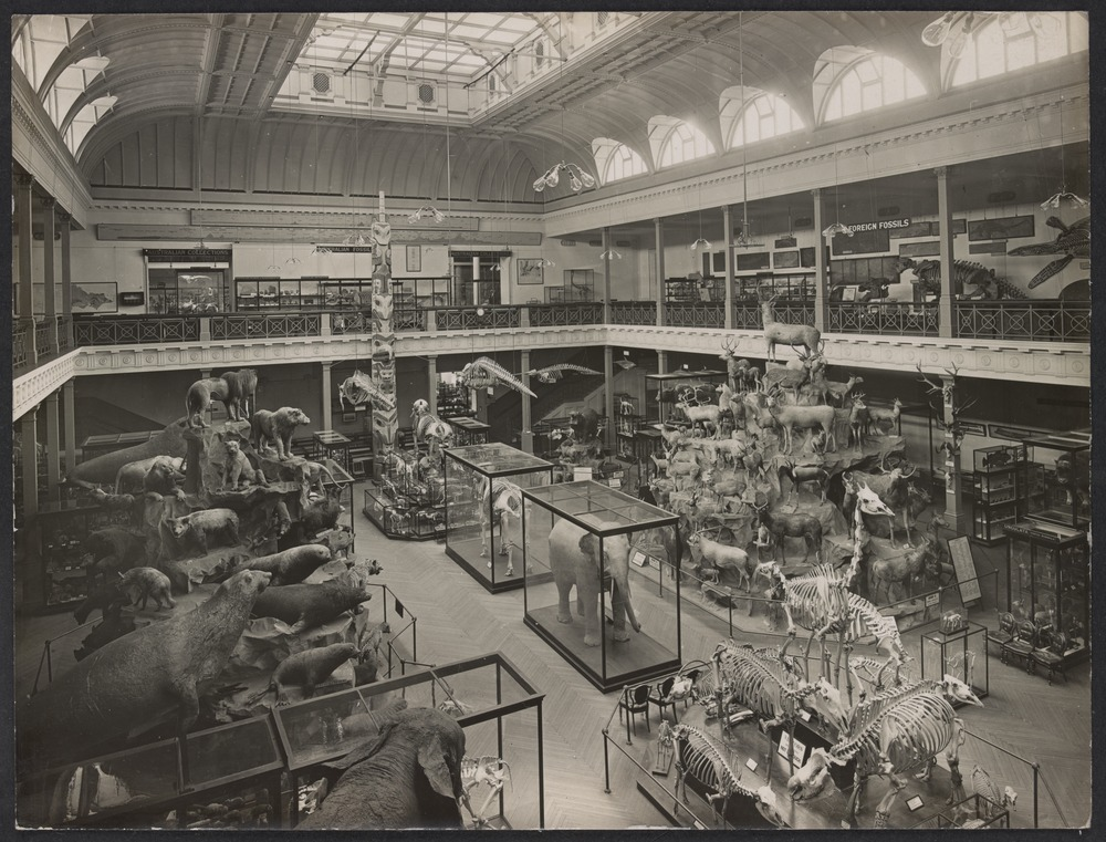 McCoy Hall, National Museum, Melbourne, c1910