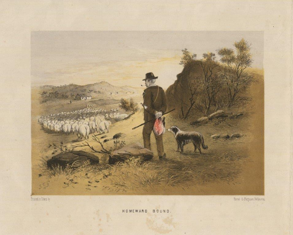 Man with dog shepherding sheep