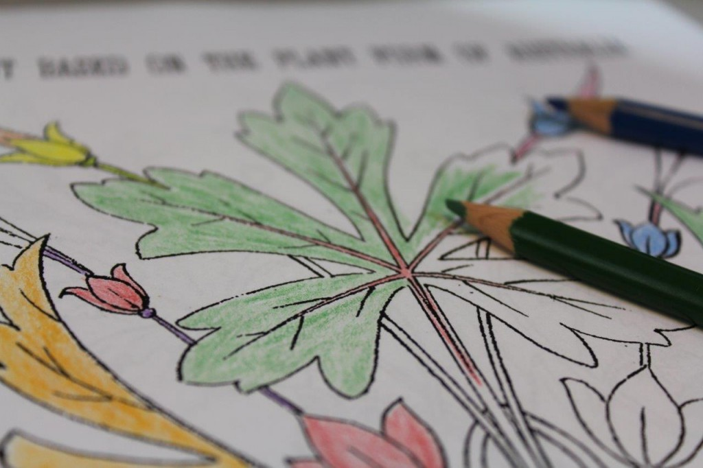 Image of botanical illustration with colouring pencils