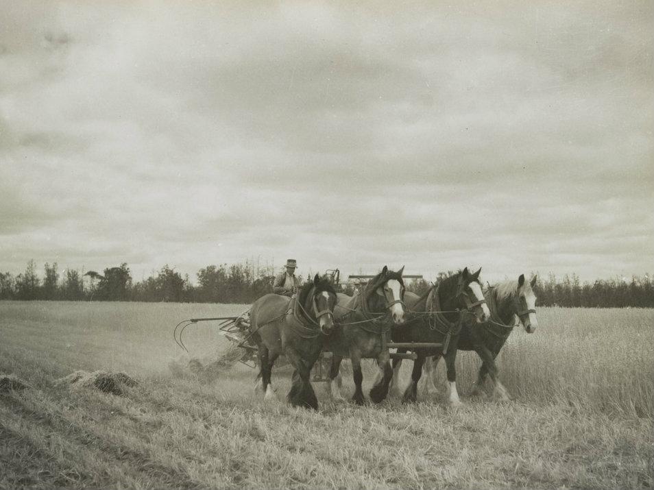 fourhorses1