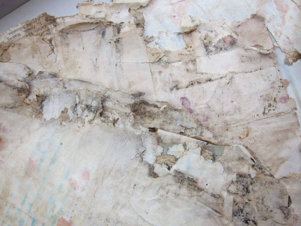 mouldy papers in quarantine