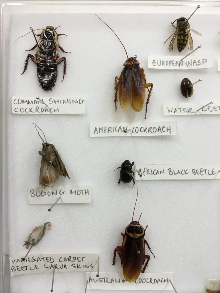bug identification