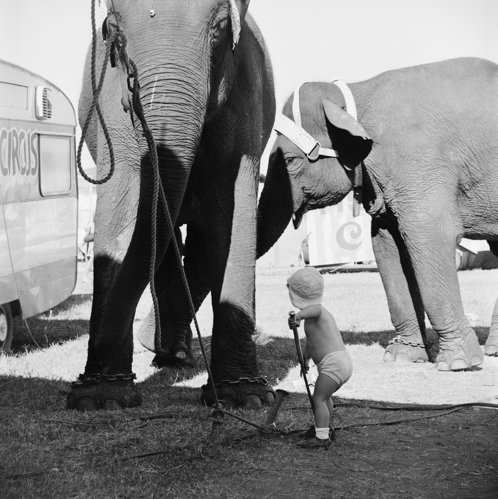 [Child with an elephant at a circus], Maggie Diaz