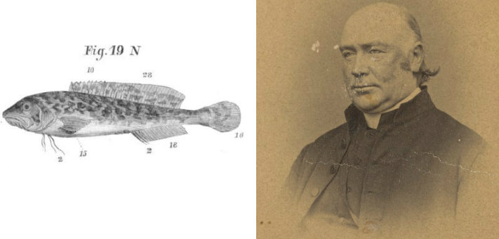 Rev Bleasdale and fish named for him