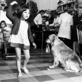 Girl and Dog in Supermarkert, Toorak Rd. c.1970. New acquisition. Photo by Rennie Ellis.