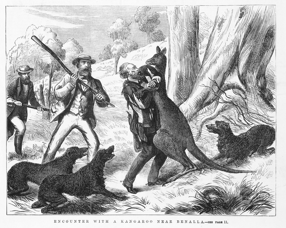 [Encounter with a kangaroo near Benalla]. Engraving by Samuel Calvert; IAN28/01/74/8