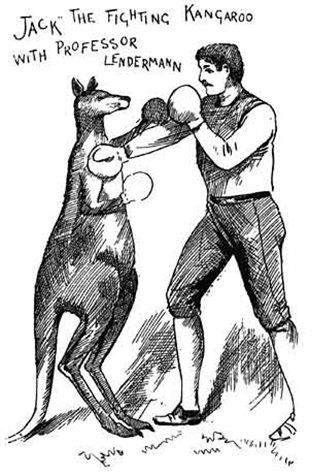Image of Jack the Fighting Kangaroo with Professor Lendermann from Melbourne Punch, 16 April 1891, p.7