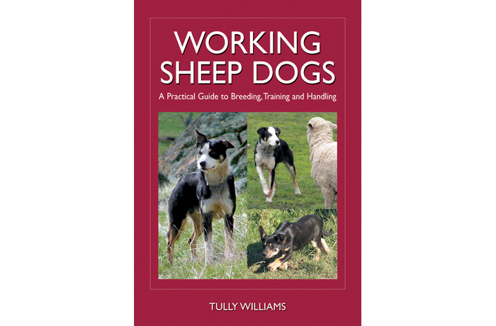 Cover: Working sheep dogs