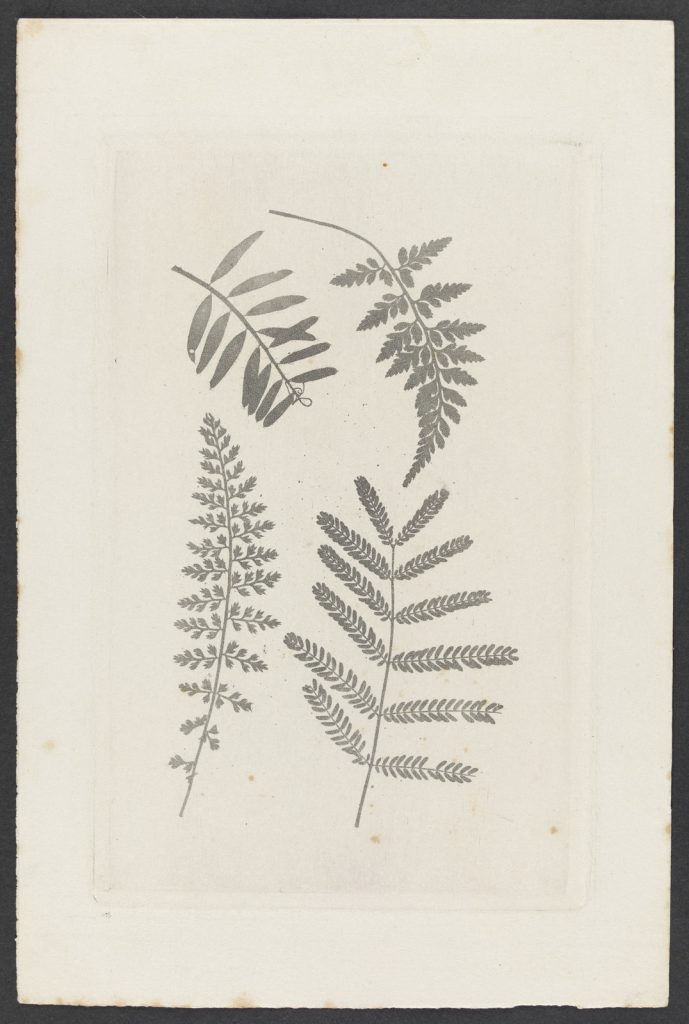 [Four fern leaves]