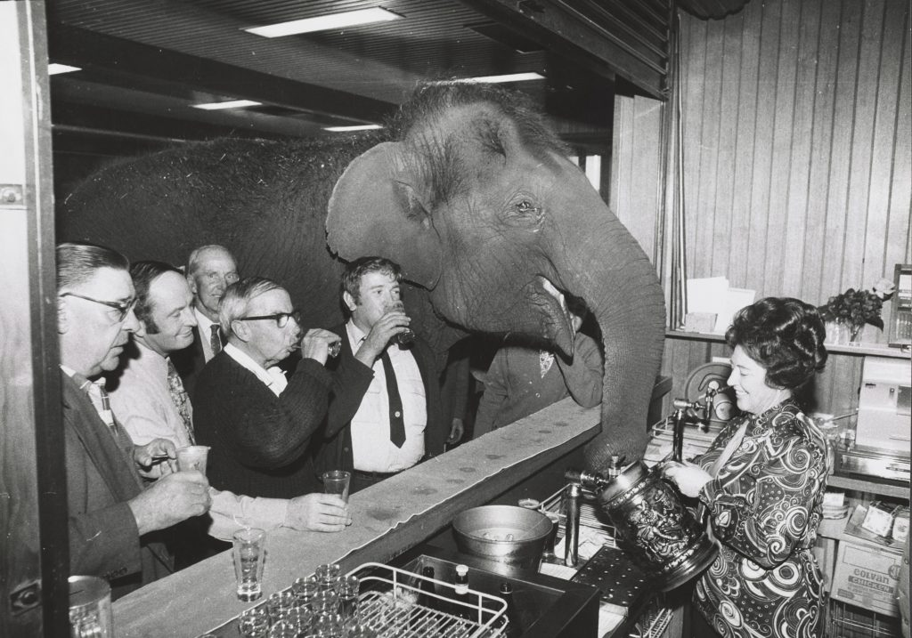 An elephant in a crowded bar, black and white photo
