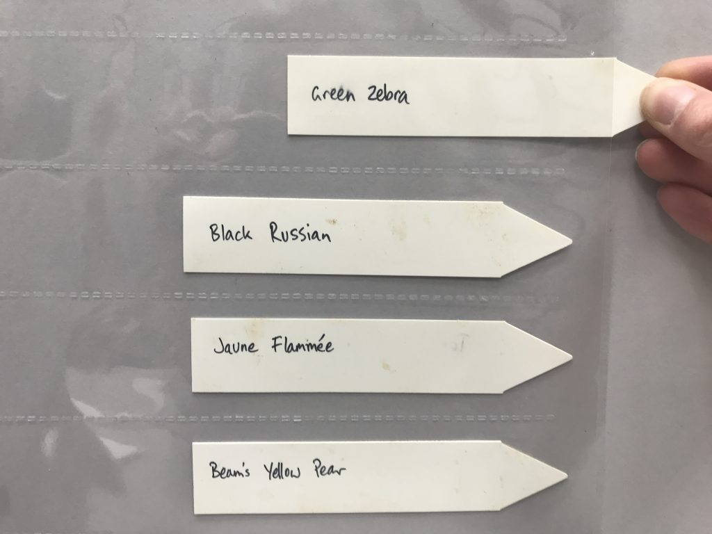 Colour photograph of four plastic plant tags with handwritten text, sitting within a plastic sleeve; one tag is in the midst of being inserted into the sleeve.