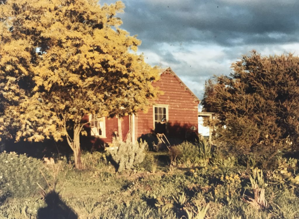 Colour photograph featuring a house in the background with trees and foliage in the foreground; the whole scene is bathed in golden sunlight, the shadow from the photographer is visible at left.