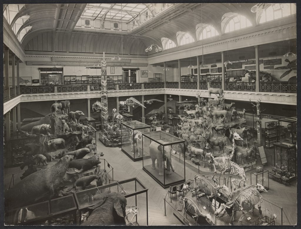 Black and white photo of stuffed animals and skeletons on display in McCoy Hall at the Library