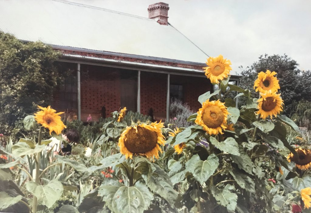 Colour photograph of a brick house in the background and a swathe of bright yellow sunflowers in the foreground.