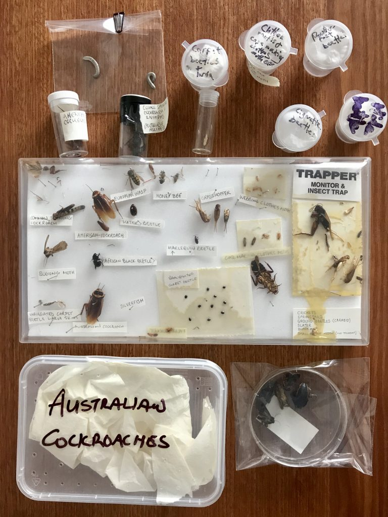 Insect specimens on a table
