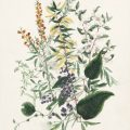 A turn around the garden: Victorian flora in the State collection