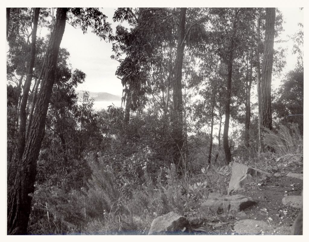 A black and white photograph of a rocky slope disappearing into thick native Australian bush vegetation.