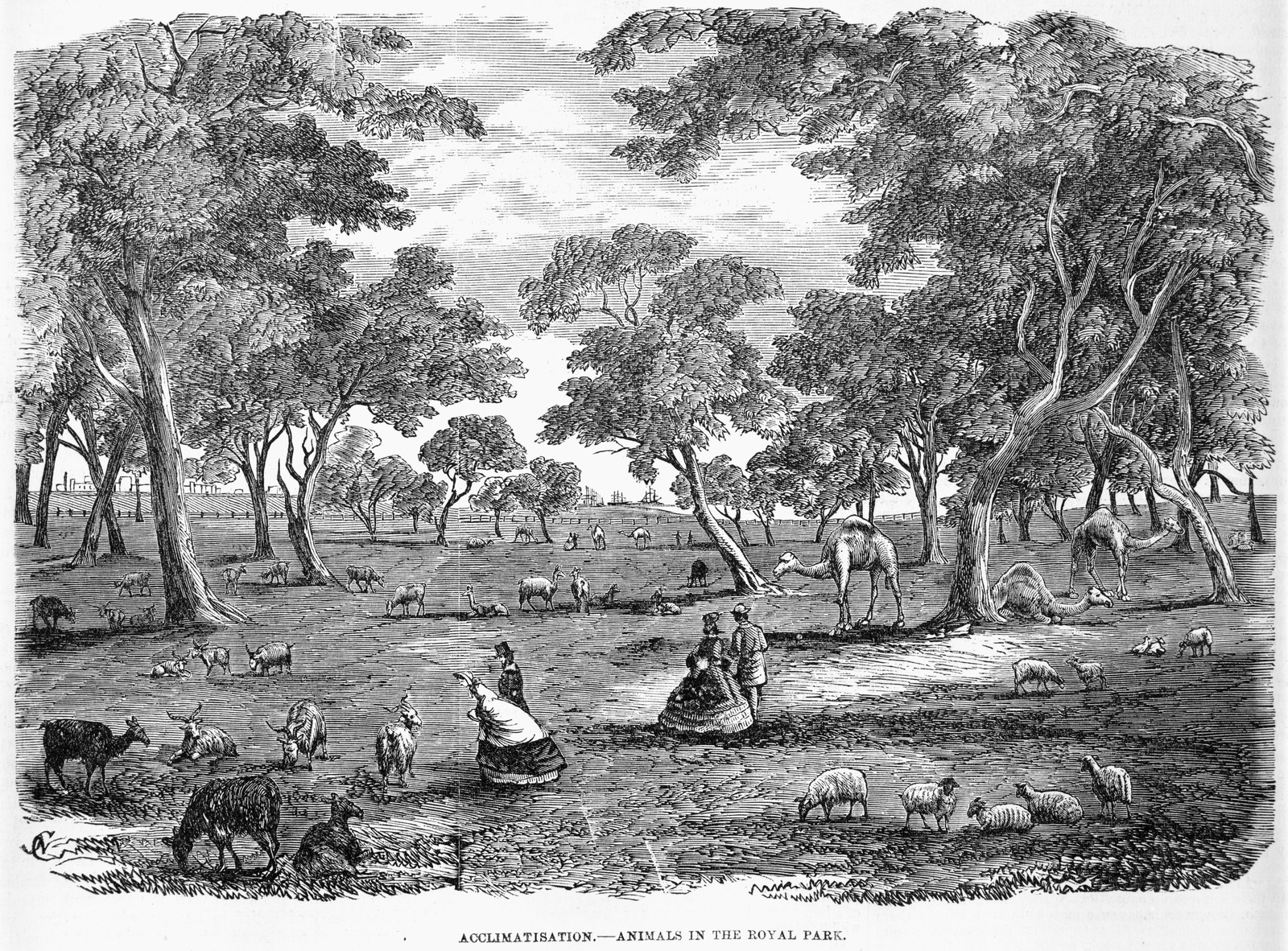 Black and white illustration of animals roaming freely in Royal Park. Several ladies and gentlemen watch on