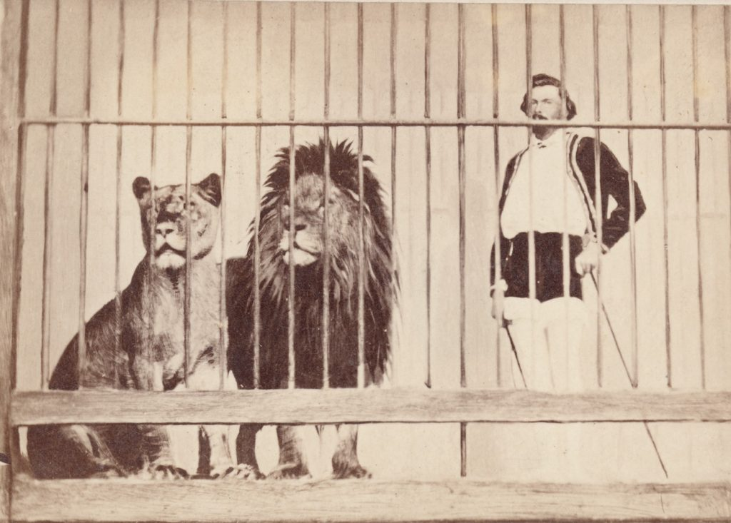 Black and white photo of lion tamer stands beside lion and lioness in cage.