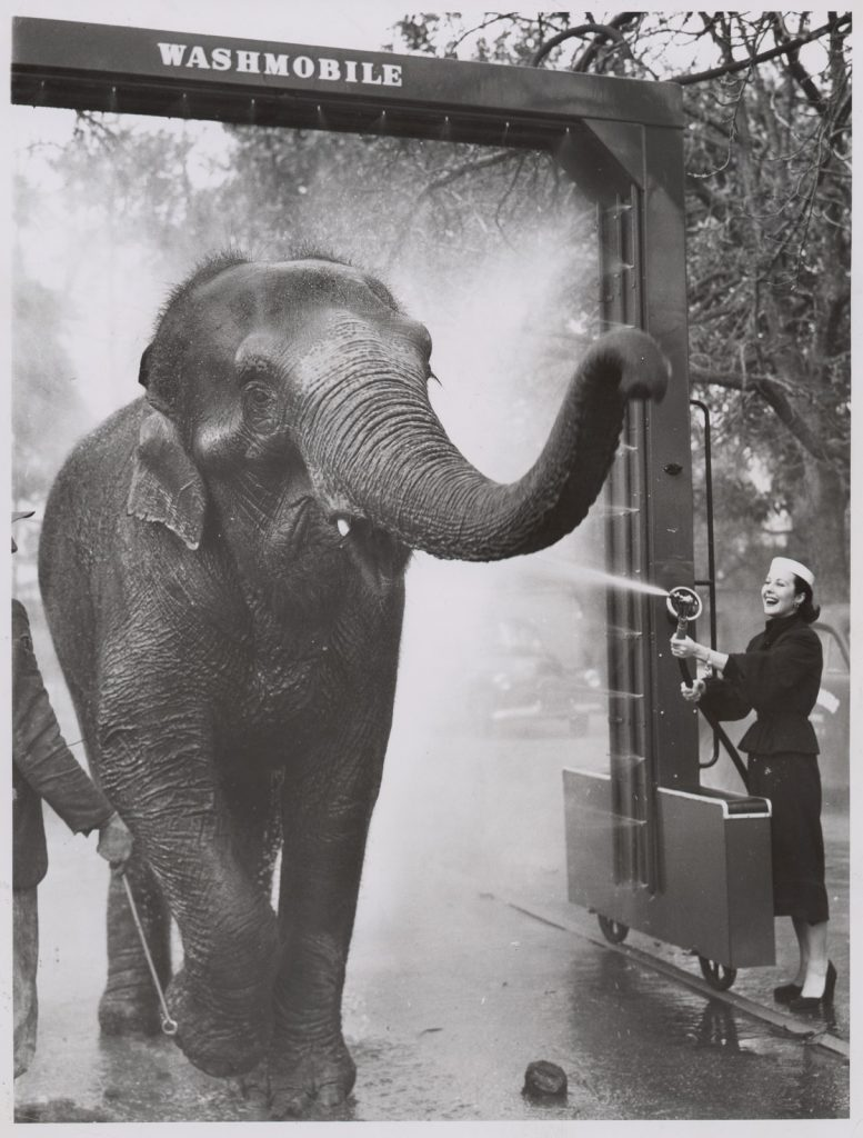 "Photograph of Felina Kennedy holding the hose as Peggy the elephant walks through the ""Washmobile""; Peggy being coaxed by keepers Carl Mackaway and Bill Craig"