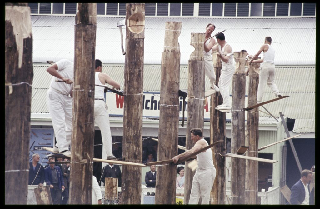 Row of eight wooden poles, men using axes while standing on planks of wood inserted into poles.