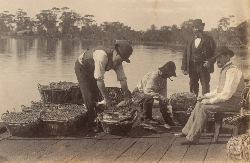 Men on a pier putting freshly caught fish in a basket.