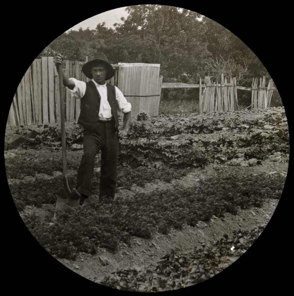 Black and white glass plate negative, showing a young man standing in a vegetable garden, wearing a brimmed hat, holding a spade