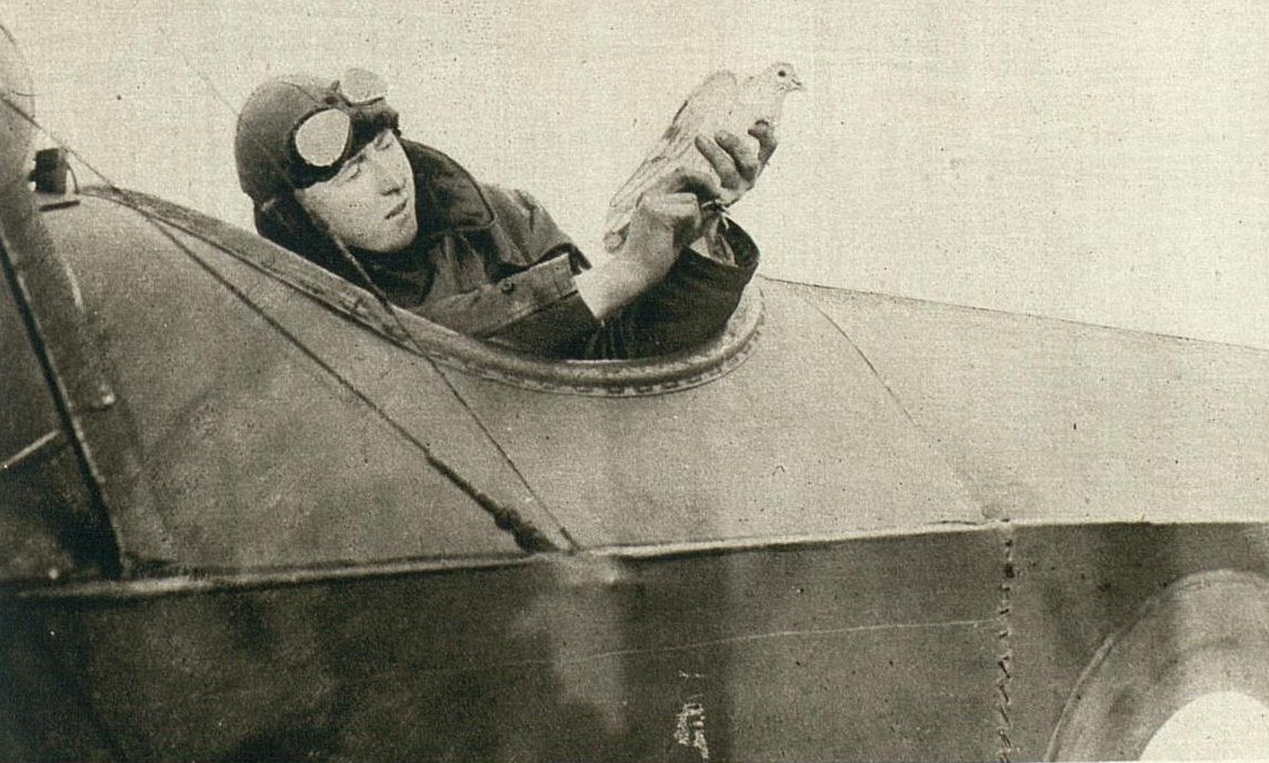 Pilot in flying helmet sits in WWI airplane holding carrier pigeon aloft