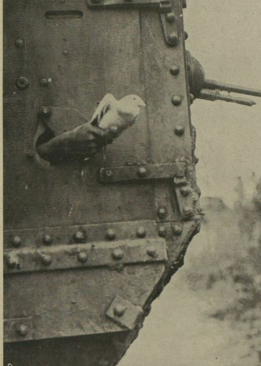 A black and white photo of a pigeon about to be released from an army tank.