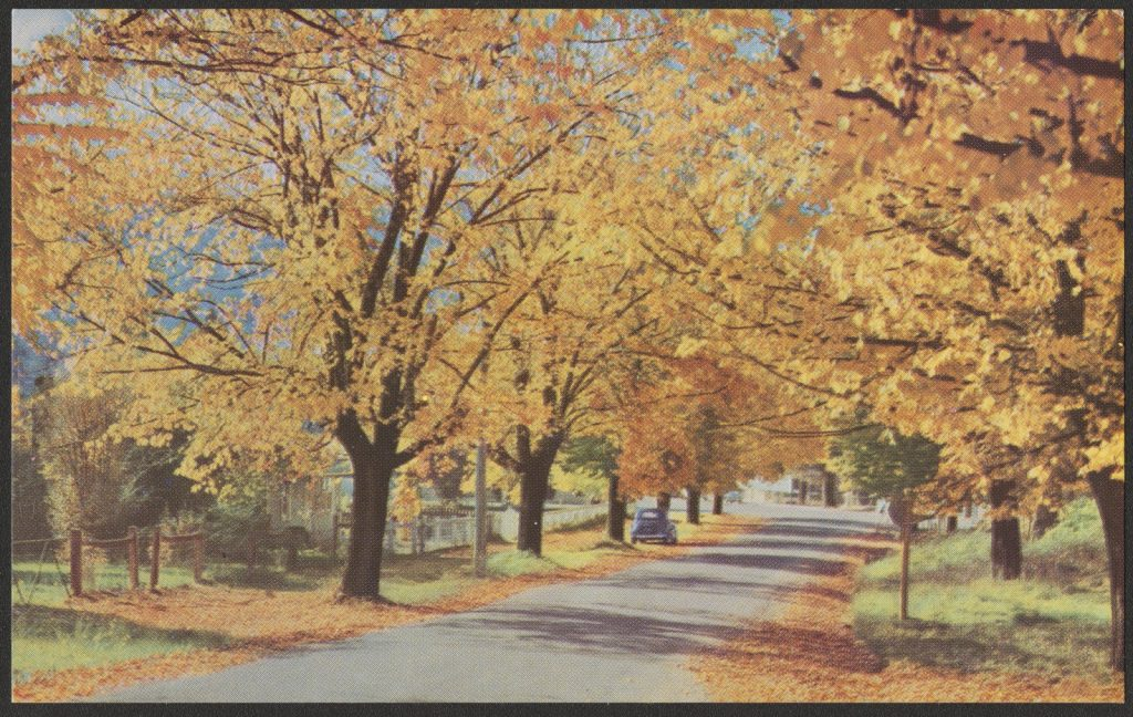 Printed colour postcard of a street lined with autumn trees.
