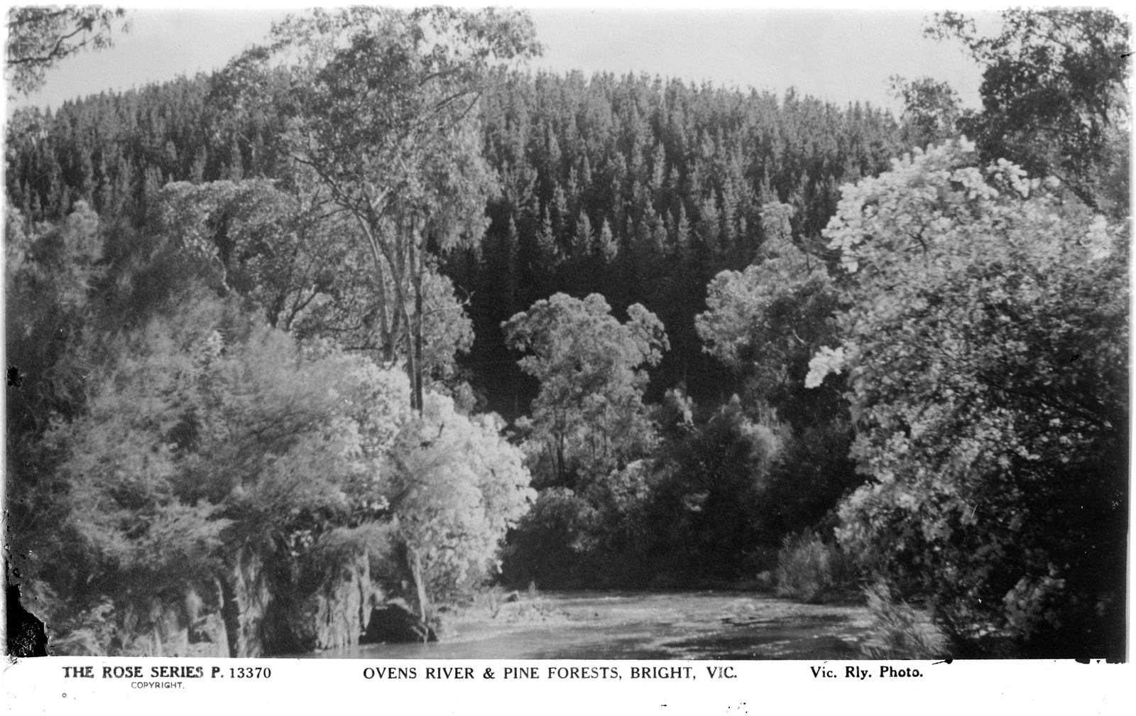 Ovens river and pine forest