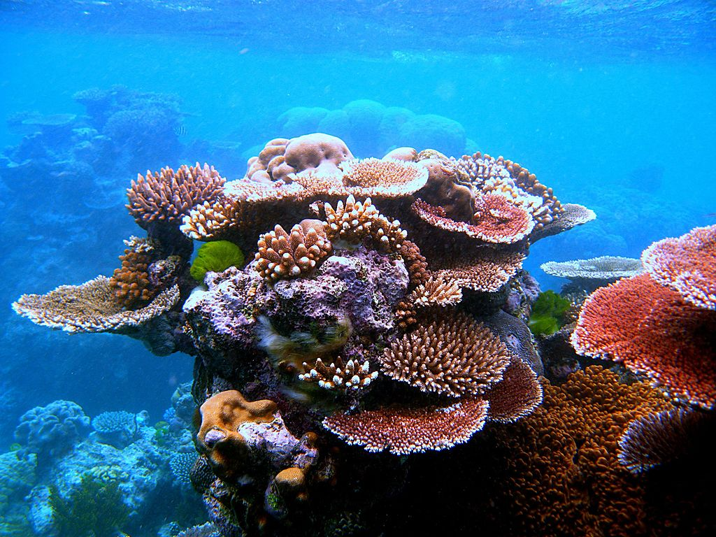 Photo of a variety of corals underwater from an outcrop on Flynn Reef